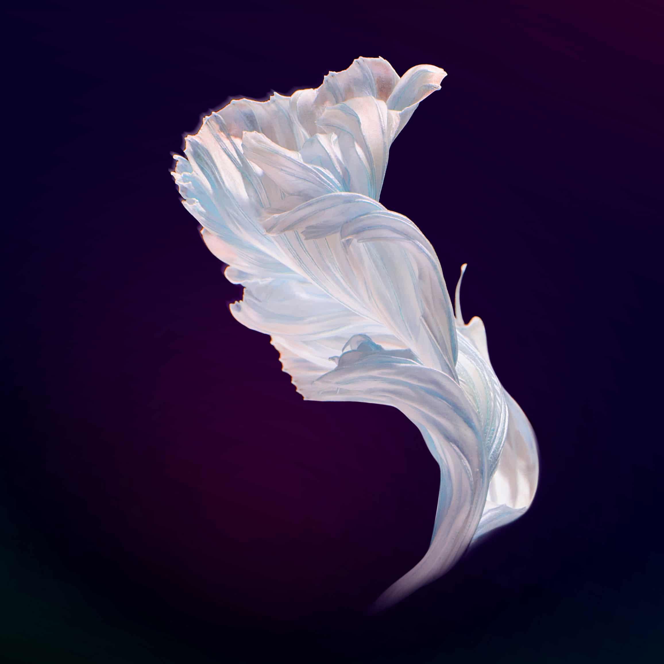 Nova 4E feather wallpaper