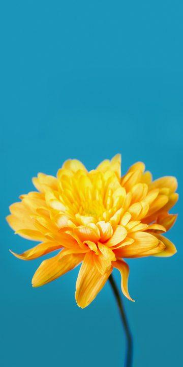 LG V35 flower wallpaper