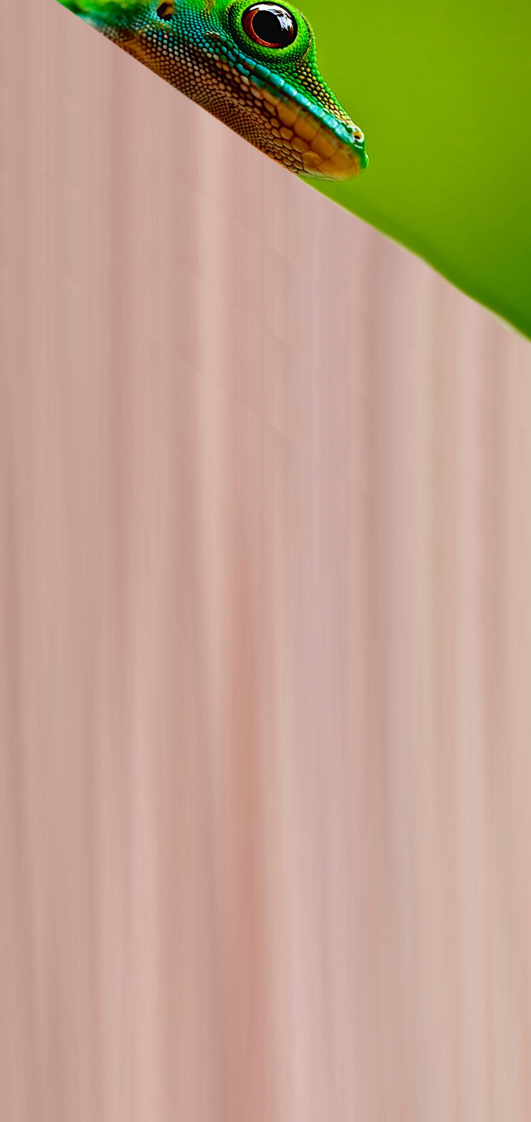 geko hole-punch wallpaper