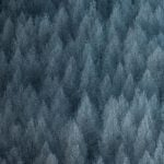 Realme Q digital forest wallpaper