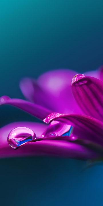 lg stylo 5 purple dew wallpaper