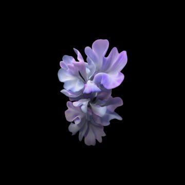 samsung galaxy z flip lotus blossom purple wallpaper